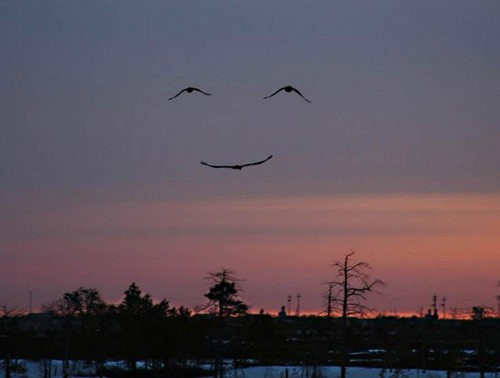 sourire-nature.jpg